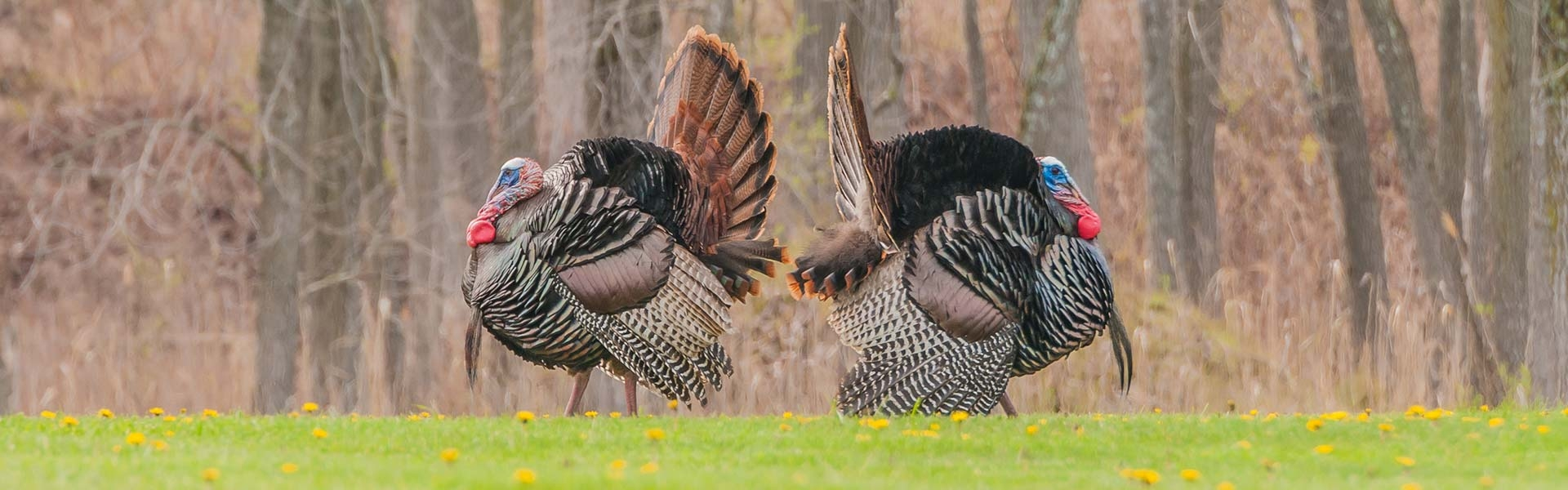 New Jersey Wild Turkey Hunts